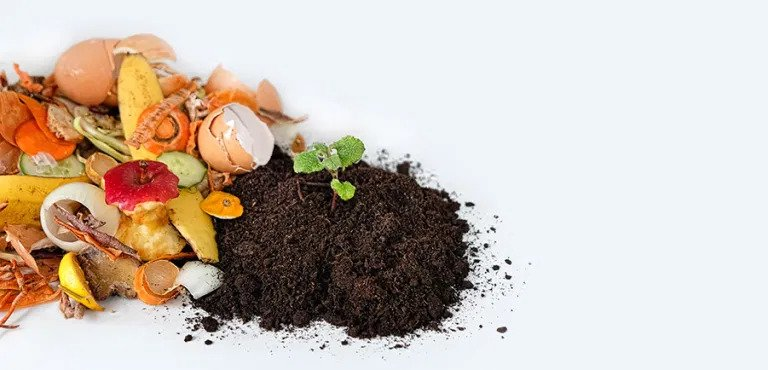 compost next to food